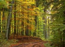 Straße im Herbstwald stockbilder