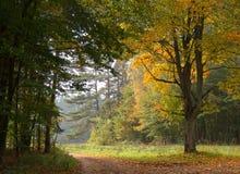 Straße im Herbstwald lizenzfreie stockbilder