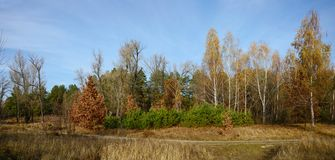 Straße im Herbstwald Stockbild