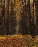 Straße im Herbstwald Stockfotografie