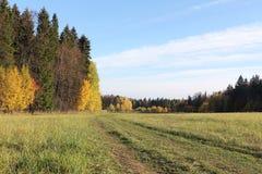 Straße im Herbstwald Stockfotos