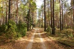 Straße im Kieferwald Lizenzfreie Stockfotos