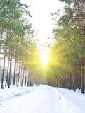 Straße im Kieferwald im Winter Lizenzfreies Stockfoto