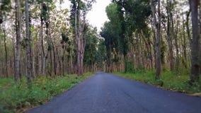 Straße im mittleren Wald zwischen Bäumen lizenzfreie stockfotos