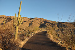 Straße im Saguaro-Nationalpark Arizona Lizenzfreies Stockfoto