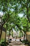 Straße im Schatten von Bäumen Lizenzfreies Stockfoto