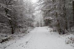 Straße im Schnee im Wald Stockfotografie