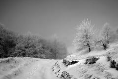 Straße im schneebedeckten Wald Lizenzfreies Stockbild