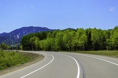 Straße im Sommerwald Stockbilder