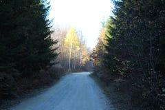 Straße im tiefen Wald stockfoto