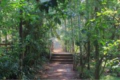 Straße im tropischen Wald Stockfotos