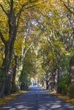 Straße im Tunnel von Bäumen im Herbst Stockfoto