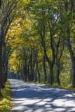 Straße im Tunnel von Bäumen im Herbst Lizenzfreie Stockfotografie