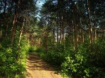 Straße im Wald Stockbild