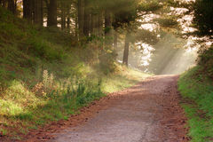 Straße im Wald. Stockbilder