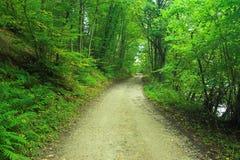 Straße im Wald Stockfoto