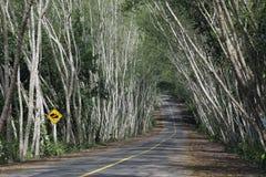 Straße im Wald Stockbilder