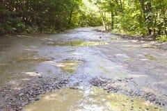 Straße im Wald Lizenzfreies Stockfoto
