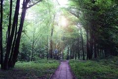 Straße im Wald lizenzfreie stockfotos