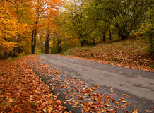 Straße im Wald Lizenzfreie Stockfotografie
