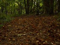 Straße im Wald Stockfotografie