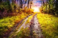 Straße im Wald, die zur untergehenden Sonne herauskommt Stockbilder