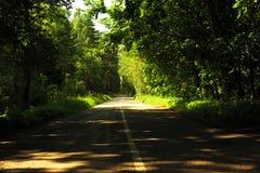 Straße im Wald mit Schatten von den Bäumen und vom Sonnenlicht Stockbilder