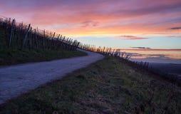 Straße im Weinberg bei Sonnenuntergang Stockfotografie