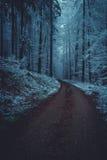 Straße im winterlichen Wald Lizenzfreies Stockfoto