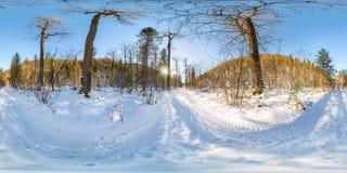 Straße im Winterwald an der Dämmerung Kugelförmiges 360 Panorama VR 180 Stockbild