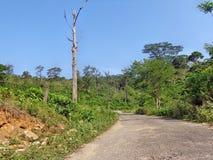 Straße innerhalb des Waldes Lizenzfreie Stockfotos