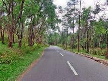 Straße innerhalb des Waldes Lizenzfreie Stockfotografie