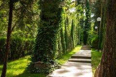 Straße ist im Wald unter den Bäumen, beleuchtet durch die Strahlen der Sonne Hintergrund stockbilder