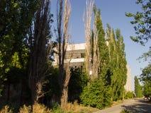 Straße mit Bäumen Lizenzfreies Stockbild
