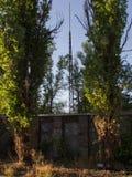 Straße mit Bäumen Stockfotografie