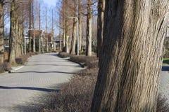 Straße mit Bäumen im Winter lizenzfreies stockbild