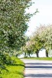 Straße mit Baum in der Blüte Stockfotografie
