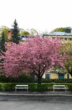 Straße mit Baum und Bänke Lizenzfreie Stockbilder