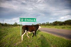 Straße mit Nationalpark Zeichen Etosha und Krächzen, welches das leere r kreuzt Lizenzfreie Stockfotografie
