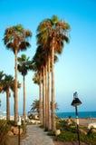 Straße mit Palmen Stockfotografie