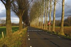 Straße mit Pappeln Lizenzfreie Stockfotografie