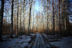 Straße mit Schnee im Wald Lizenzfreie Stockfotos