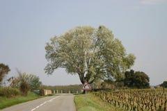Straße mit Weinberg lizenzfreie stockfotos