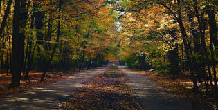 Straße mitten in dem Wald Stockfoto