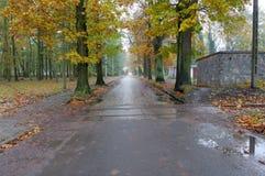 Straße nach einem Regen Stockfotografie
