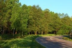 Straße nahe dem Wald Lizenzfreies Stockbild