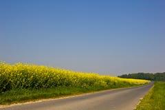 Straße nahe einem canola Feld Stockbild