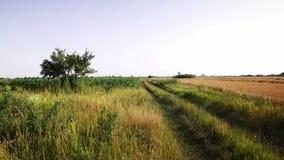 Straße nahe einem Weizenfeld Lizenzfreie Stockfotos