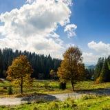 Straße nahe Herbstwald auf Hügel Lizenzfreie Stockbilder