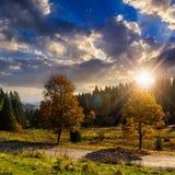 Straße nahe Herbstwald auf Hügel Stockbilder